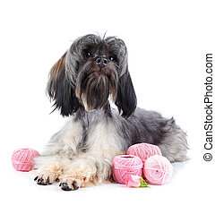 Decorative doggie with balls of threads.