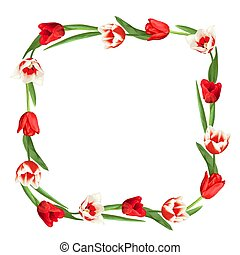 Decorative element with red and white tulips. Beautiful realistic flowers, buds and leaves