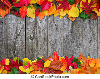 decorative fall - colorful autumn leaves on old wooden...