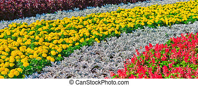 Decorative flower bed, Moscow, Russia, East Europe