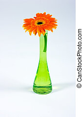 Decorative flower in glass vase isolated on white background