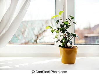 Decorative flowers in flowerpot on windowsill