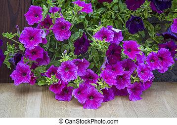 ampelnye plants. decorative purple petunia flowers. flora