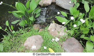 Decorative garden creek and ornamental water plant, stock...