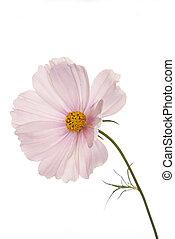 Decorative garden flower