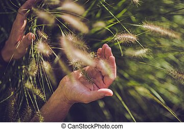 Decorative Garden Grass