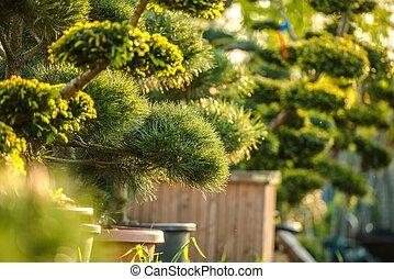 Garden Plants in Wooden Pots