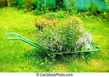 decorative garden wheelbarrow with bunch of plants on green grass background.