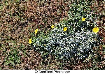 Decorative garden with plants