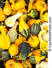 Decorative gourds on display