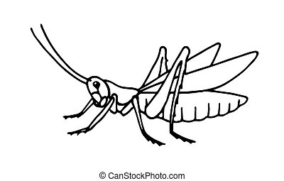 decorative grasshopper, invertebrate insect, voracious locust, vector illustration with black ink contour lines isolated on a white background in hand drawn style