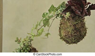 Decorative green shrub in form of ball, decor