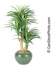 Decorative house plant