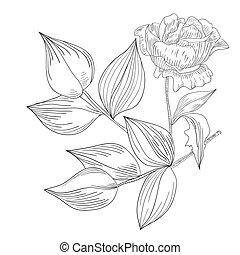 Decorative illustration Rose flowers