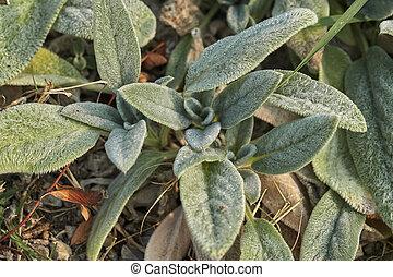 decorative leaf in the garden