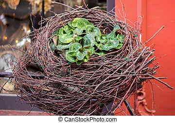 Decorative nest from twigs and fresh flowers near windows of old red house. Concept of beginning of spring, Easter, seasons and urban life