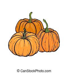 decorative orange pumpkins. Hand drawn sketch vector autumn illustration. Thanksgiving Day, halloween Holiday background. Harvest
