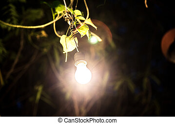 Decorative outdoor string lights hanging on tree in the garden at night time.