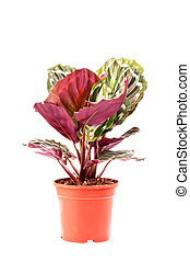 Decorative plant in pot on white background