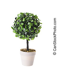 Decorative Plant in the Pot Isolated