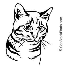 Decorative portrait of Cat 7