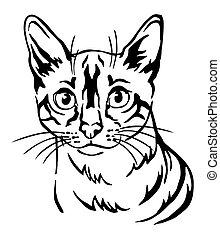 Decorative portrait of Cat 8