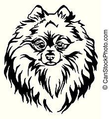 Decorative portrait of Dog Pomeranian Spitz vector illustration