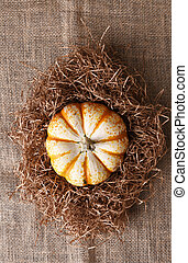 decorative Pumpkin in Straw on Burlap