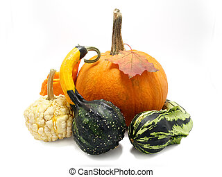 Decorative pumpkins collection isolated on white