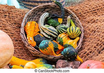 Decorative pumpkins green yellow striped in a wicker basket, garden decor, harvest festival, artificial pumpkin indie rattle