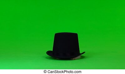 decorative rabbit sits in a black hat on green screen