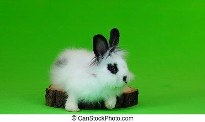 decorative rabbit sits on the stump on green screen