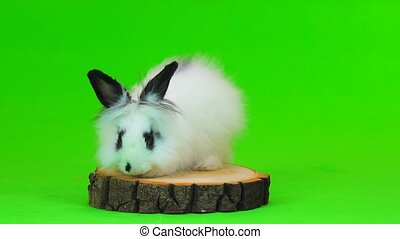 decorative rabbit sits on the stump on green screen