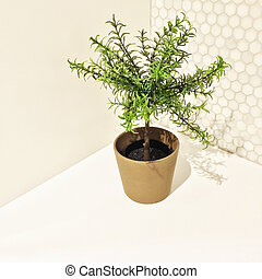 Decorative rosemary tree in the kitchen corner