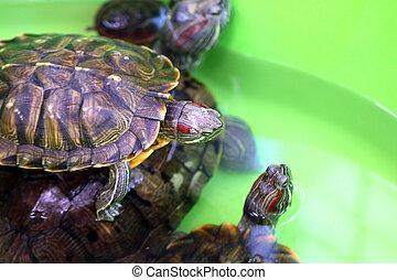 Decorative sea turtles