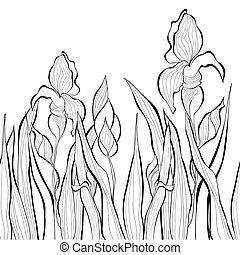 Decorative seamless border with Iris flowers
