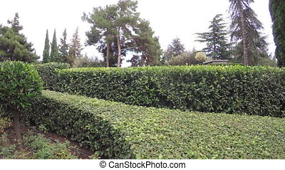 Decorative shrubs in park - RUSSIA, GURZUF, OCTOBER: Camera...