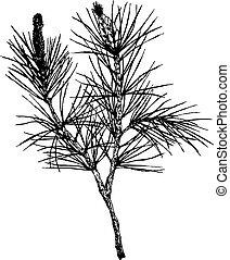 decorative silhouette hand drawn pine branch
