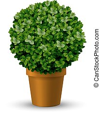 Decorative spherical boxwood in a pot - Decorative spherical...