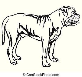 Vector sketch dog boerboel breed EPS Vector | csp33711523