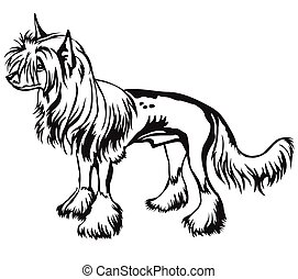 Decorative standing portrait of Chinese Crested Dog vector illustration