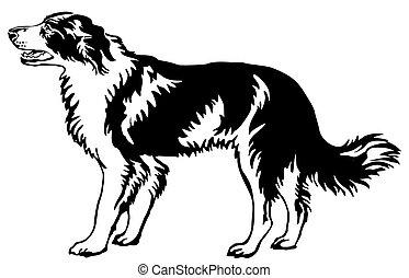 Decorative standing portrait of dog border collie, vector illustration