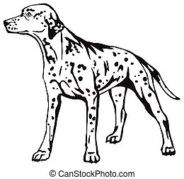 Decorative standing portrait of dog Dalmatian vector illustration