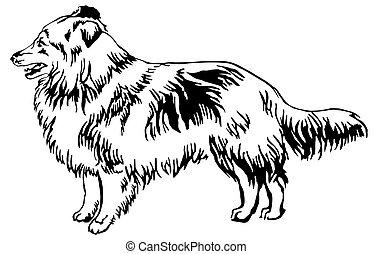 Decorative standing portrait of dog Sheltie vector...