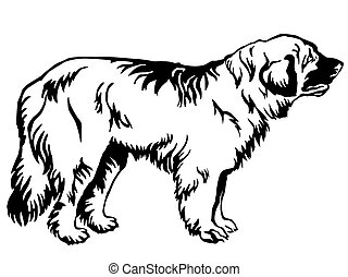 Decorative standing portrait of dog Leonberger vector illustration