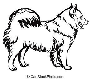 Decorative standing portrait of dog Samoyed vector illustration