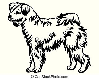 Decorative standing portrait of Pumi dog vector illustration