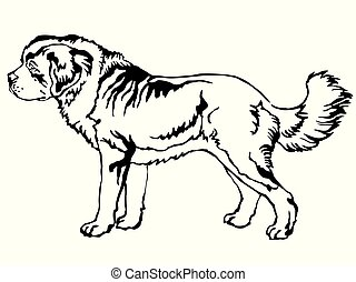 Decorative standing portrait of St. Bernard Dog vector...
