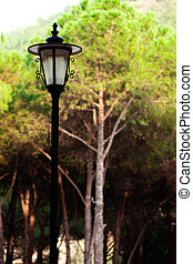 Decorative Street Lamp in the Forest