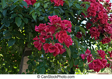 Decorative tree blooming with big red flowers